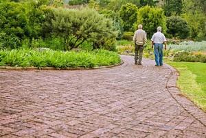 Old Friends Taking a Walk