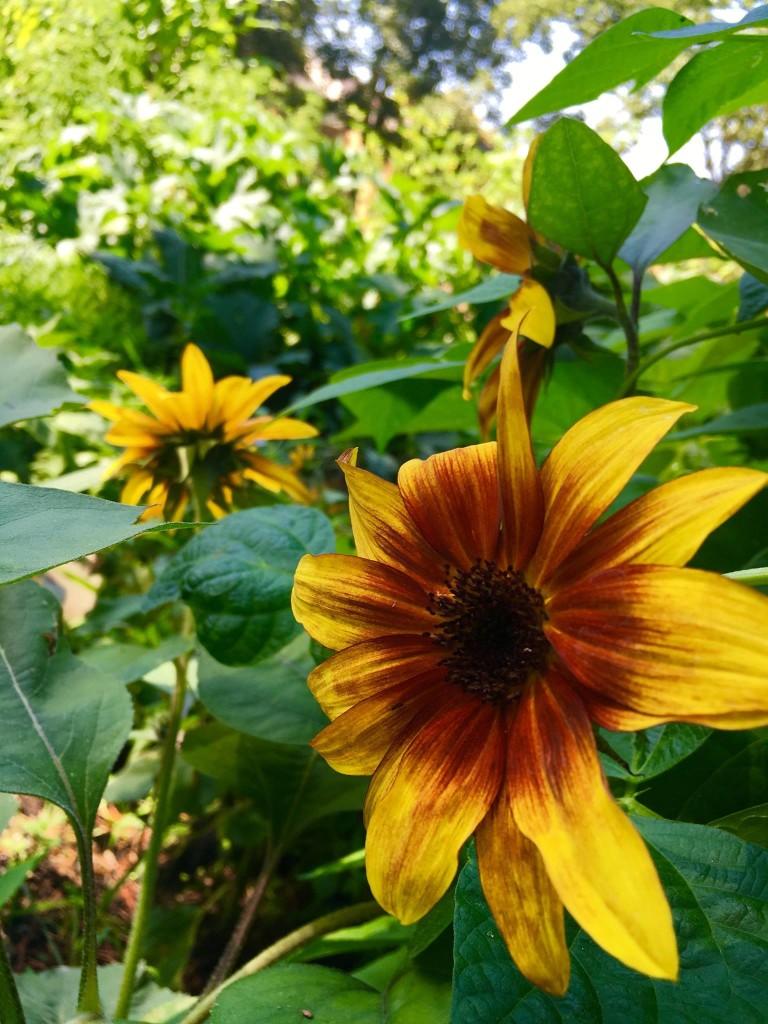 Plants in the Garden at Primrose Memory Care Facility